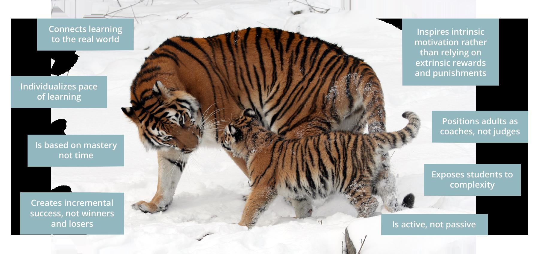tiger-graphic